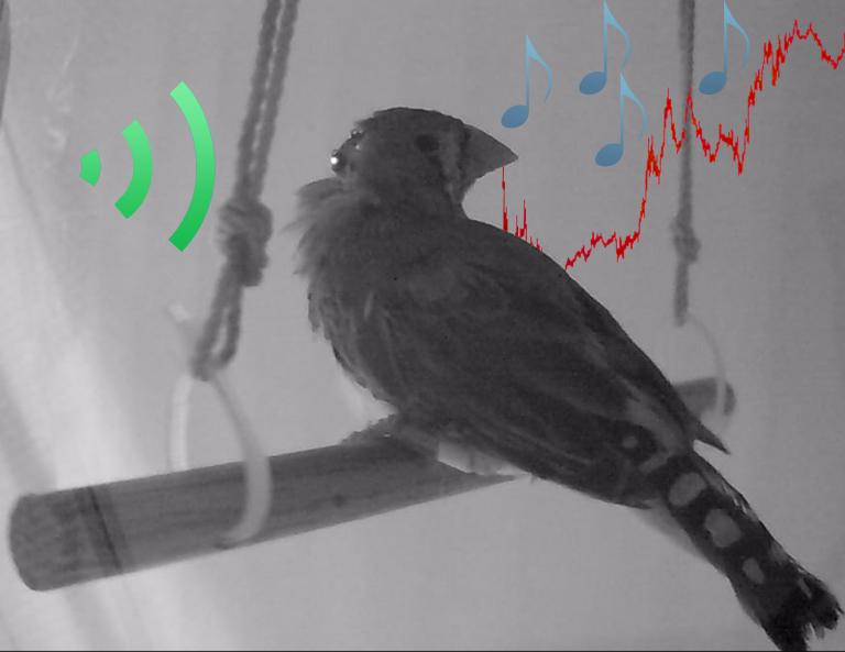 Black and white photo of a bird with red music notes superimposed on the photo