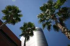 Shot from below of the ECE building and three palm trees.